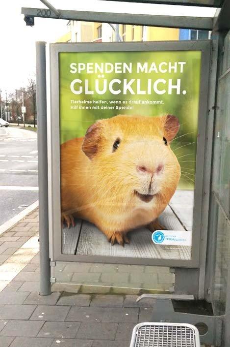 Deutschter Tierschutzbund – Spenden macht glücklich