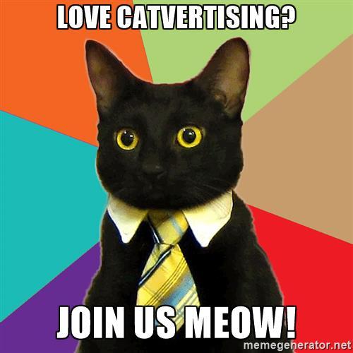 Bewerbung Werbeagentur Katze