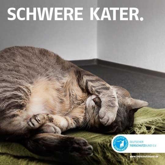Deutscher Tierschutzbund – Tierheime mit Verbindungen fürs Leben